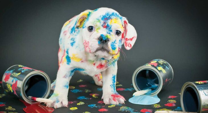 Dog covered with paint